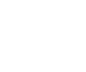 Wild Bear Design